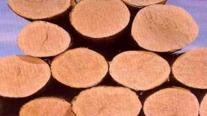 Resolute CEP Logs Forestry Endangered species