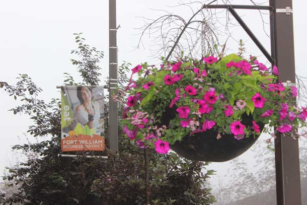Flowers, banners and benches in the Fort William Downtown BIA