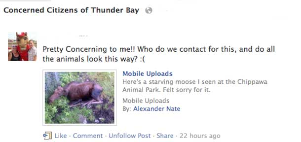 """The moose is not loose. Social Media Postings on a """"starving moose' appeared in Thunder Bay"""