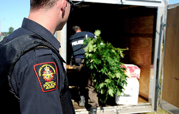 A CF military policeman watches as a member of the RCMP puts marihuana plants in a trailer