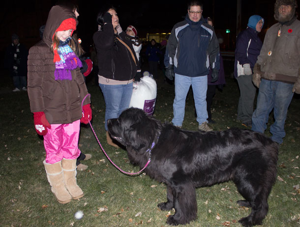 Journey, a large Newfoundlander dog at the tree lighting showed up so people could be warmed up petting him as he didn't seem to mind the cool weather