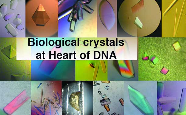 Biological crystals. Photo: International Union of Crystallography (IUCr)