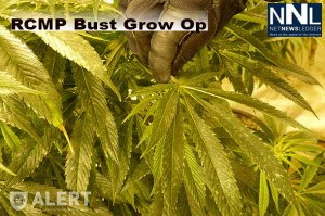 RCMP Have Busted a Grow-Op in Spruce Grove Alberta