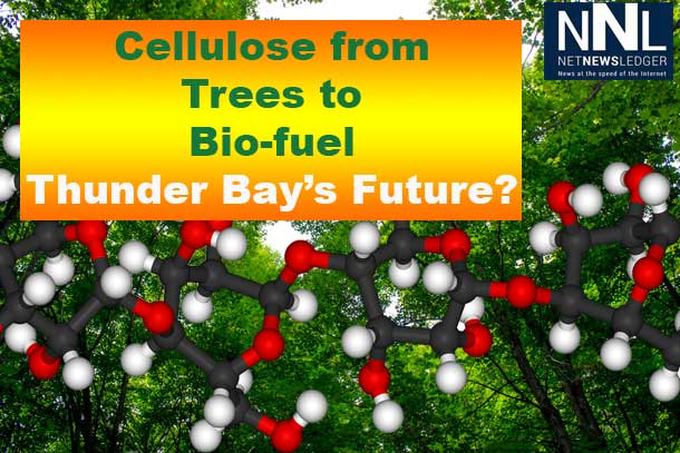 Converting dead plant matter to bio-fuel could change the game for forestry.