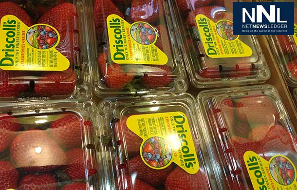 Strawberry prices could almost double in price.
