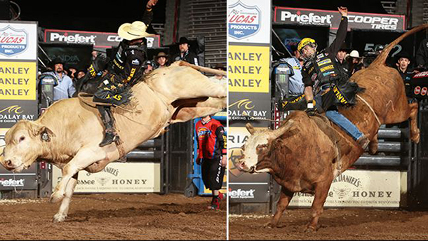 The Bulls were winning over the Cowboys at the PBR Event in New Mexico on Friday Night.