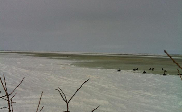 Spring goose hunting along James Bay in Washaho First Nation - Fort Severn.