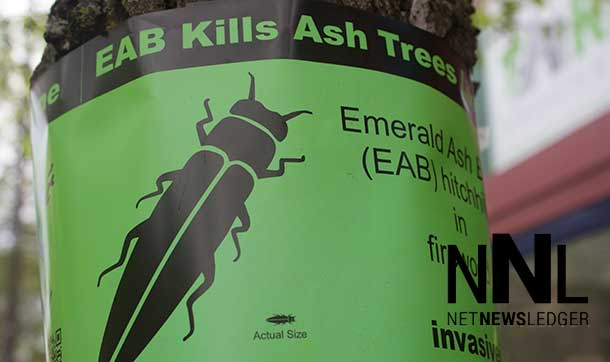 Ash Trees across the city are facing a serious threat from the EAB