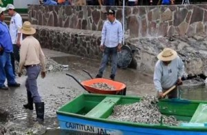 Thousands of fish are dead in this lagoon in Mexico