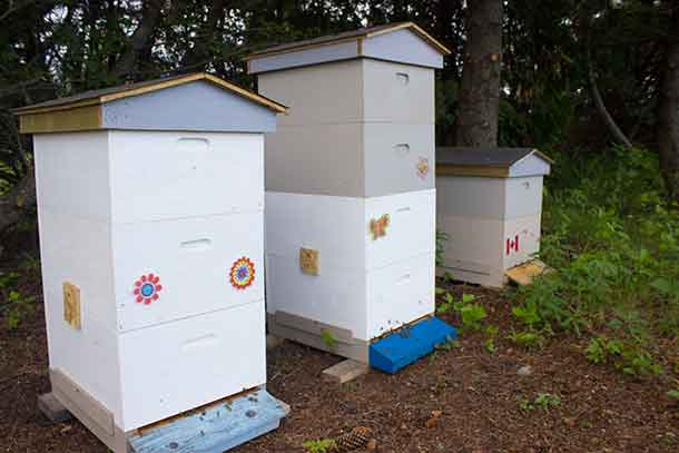 Beehives in Thunder Bay at the Centennial Conservatory