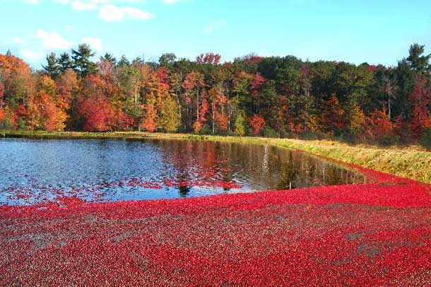 Ontario Cranberries