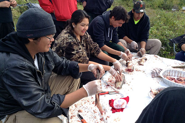 (from left to right) Elmer Mack, Brandi Hunter, Jared Bird and Daylan Chookomolin learn from elders Laura Koostachin and Annie Wabano how to prepare fish for frying or smoking.