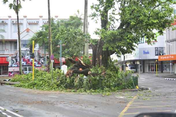 A tree in the center of Fiji's capital Suva lays in ruin after Cyclone Winston swept across Viti Levu Island, February 21, 2016. REUTERS/Taniela Qalilawa/Handout via Reuters