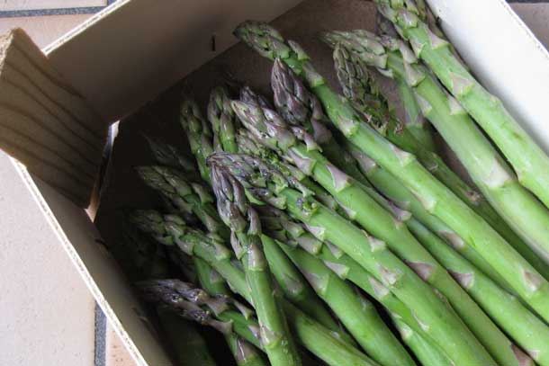 Freshly cut asparagus. Credit: Copyright 2016 Sue Style