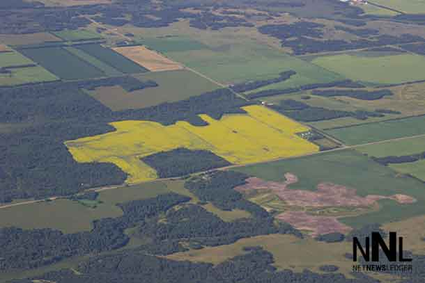 Farm Fields in Manitoba