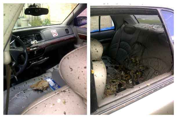A combination photo shows Royal Canadian Mounted Police (RCMP) images showing inside of a taxi where there was a detonation with suspect Aaron Driver inside when RCMP Explosives Disposal Unit and Emergency Response Team were deployed in Strathroy, Ontario, Canada on August 10, 2016. Courtesy RCMP/Handout via REUTERS