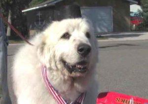 Mayor Duke the Dog in Cormorant Minnesota