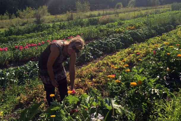 Evalisa McIllfaterick of Root Cellar Gardens uses traditional, organic and ecologically-minded practices in her everyday farming. With her goal of having items available all year round, McIllfaterick knows a thing or two about growing fresh, local produce. You can find Root Cellar Gardens at the Thunder Bay Country Market (Wednesdays and Saturdays) and the Thunder Bay Regional Health Sciences Centre Fresh Market (Wednesdays).