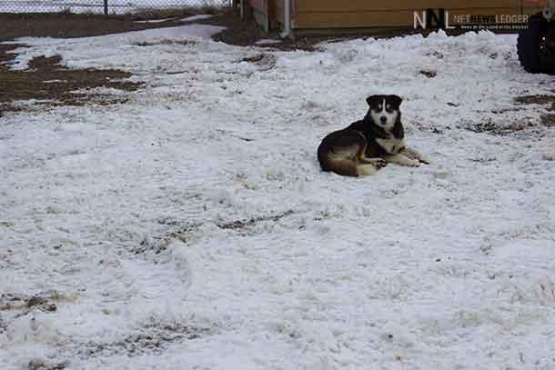Blizzard Warning – Fort Severn and Peawanuck - Net Newsledger
