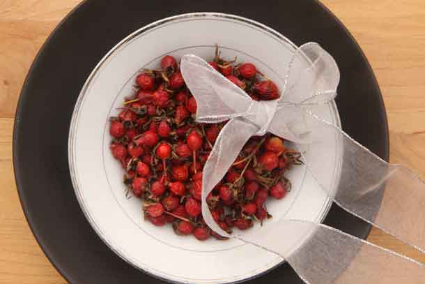 Rose hips. Credit: Copyright 2016 Wendy Petty