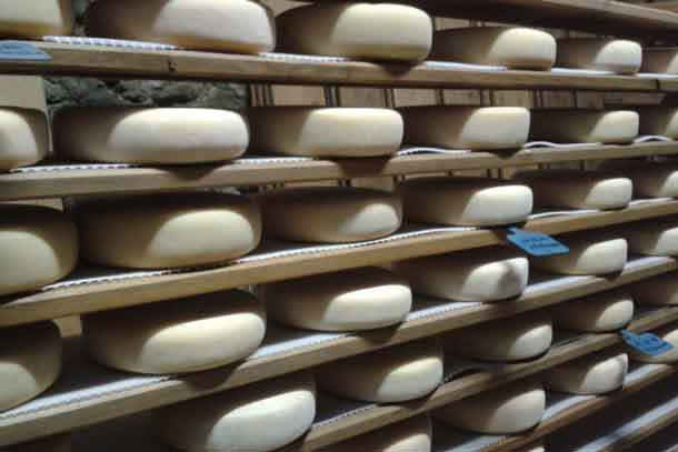 Cheeses age in the cellar at Formatgeria Mas d'Eroles. Credit: Copyright 2017 Sue Style