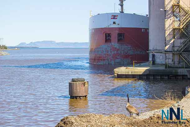 A Canada Goose looks out at the RT Hon Paul J. Martin a Canada Steamships Line freighter with the Sleeping Giant in the background.