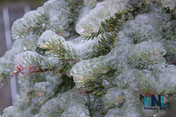 Pine needles frozen in ice - Nature is telling us to slow down?
