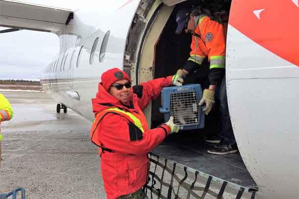 Ranger Rapheal Sutherland loads an evacuee's pet dog onto an evacuation plane.