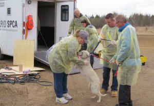 Victoria Day Weekend Dog Rescue