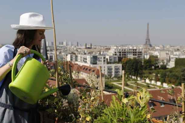 Charlotte Arnoux, recruitment officer and first-time gardener, waters plants on the 700 square metre (7500 square feet) rooftop of the Bon Marche, where the store's employees grow some 60 kinds of fruits and vegetables in Paris, France, August 26, 2016. REUTERS/Regis Duvignau