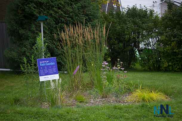 A rain garden is shaped like a bowl that soaks up runoff from a rooftop or other hard surface like a parking area. The rainwater is absorbed into the soil instead of flowing into a storm drain that empties into local streams. Rain gardens and other green infrastructure are often planted with wildflowers or other native perennials that provide homes and food for birds and insects.