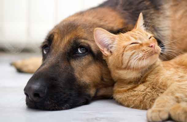 Cats or dogs: scientists find out who is smarter