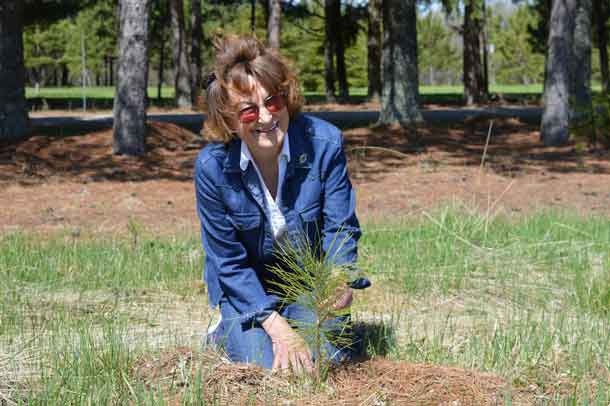Wanda Mitchell planted 15,000 trees on her Dryden property. (IMAGE - Forests Ontario)