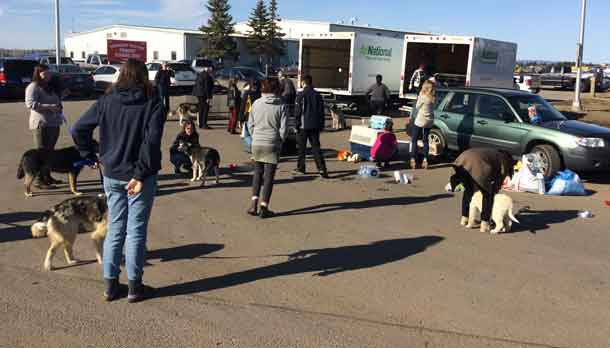 Northern dogs getting some exercise, care and water in Thunder Bay