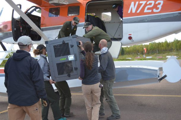 Credit: USFWS/Courtney Celley Project staff load a crated wolf into a seaplane for a flight to the island