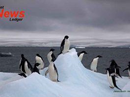 Adelie Penquins on iceberg - Image Creative Commons