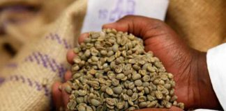 RCHIVE PHOTO: An employee shows coffee beans at the Central Kenya Coffee Mill near Nyeri, Kenya, March 15, 2018. REUTERS/Baz Ratner/File Photo