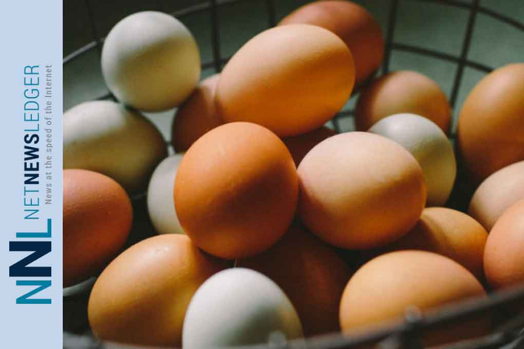 Eating eggs can raise risk of heart disease, research finds