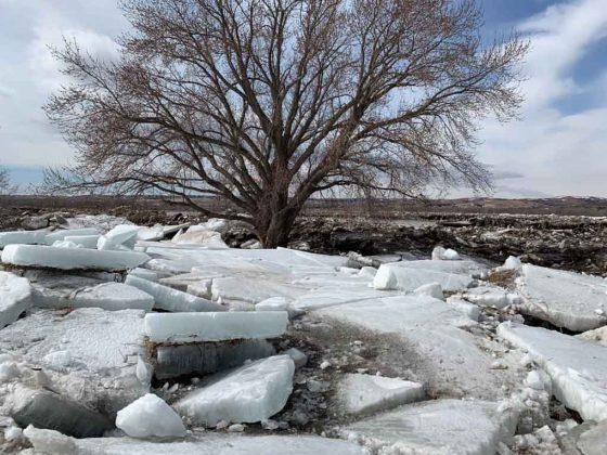 Ice Flows on fields