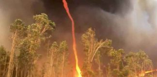"A ""firenado"" is seen in Southampton, Western Australia, Australia February 19, 2019 in this picture grab obtained from a social media video. THOMSON BROOK VOLUNTEER BUSH FIRE BRIGADE/via REUTERS"