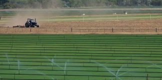 Sod is irrigated next to a field being plowed in the San Pasqual Valley near Escondido, California, United States August 30, 2016. REUTERS/Mike Blake