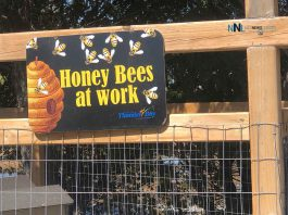 Honey bees at work at Thunder Bay Centennial Conservatory
