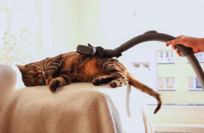 Your cat does not have to be scared of the vacuum