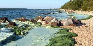 Blue Green Algae on Lake Winnipeg