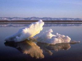 FILE PHOTO: Sea ice floats within the 1002 Area of the Arctic National Wildlife Refuge in this undated handout photo provided by the U.S. Fish and Wildlife Service Alaska Image Library. REUTERS/HANDOUT/U.S. Fish and Wildlife Service Alaska Image Library/File Photo