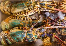 Fresh lobster at the seafood market.