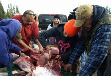 Teaching the traditional methods of skinning and butchering a moose was provided by Elders and hunters at the recent Traditional Moose Hunt Camp near Matachewan FN from October 4 to 6. From L-R are: Elder Gertie Nolan, Chief Jason Batisse, Matachewan FN; Loretta Doupe, Brittany Batisse and Elder Mario Batisse.