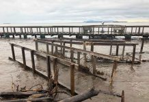 Damage to Boardwalk and Trails at Mission Island Marsh Conservation Area