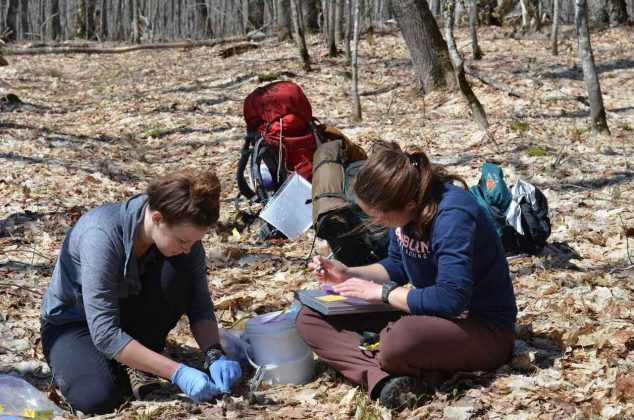 Wolf project technicians Megan Petersohn (left) and Cara Ratterman (right) sample wolf scat detected at wolf GPS cluster site, spring 2019, on Isle Royale. (photo courtesy of Tyler Petroelje, SUNY-ESF)
