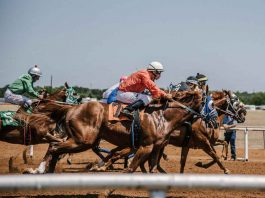 6 Ways to Handle a Losing Streak When Betting on Horses
